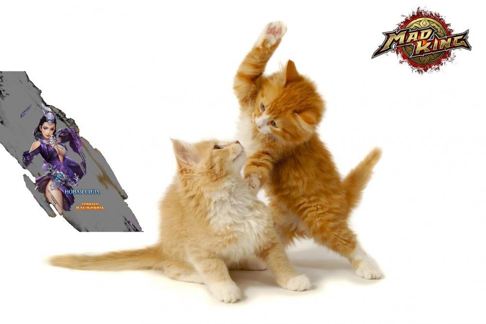 fightingcats1.jpg